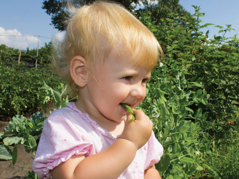 girl eating peas