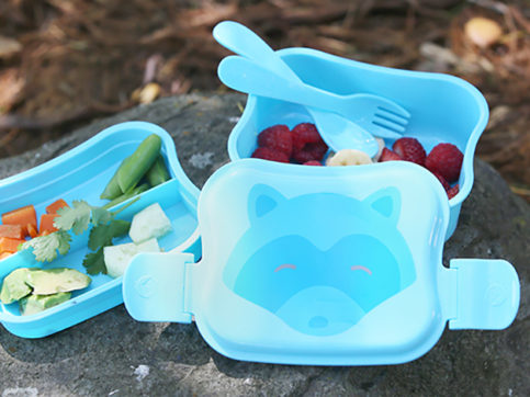 aqua fox bento box outside